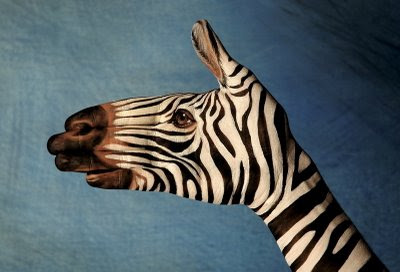 Zebra Illusion | Hand Painted Illusion