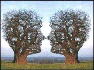 Two Trees and Two Face Illusion