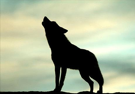 [Lobo.JPG]
