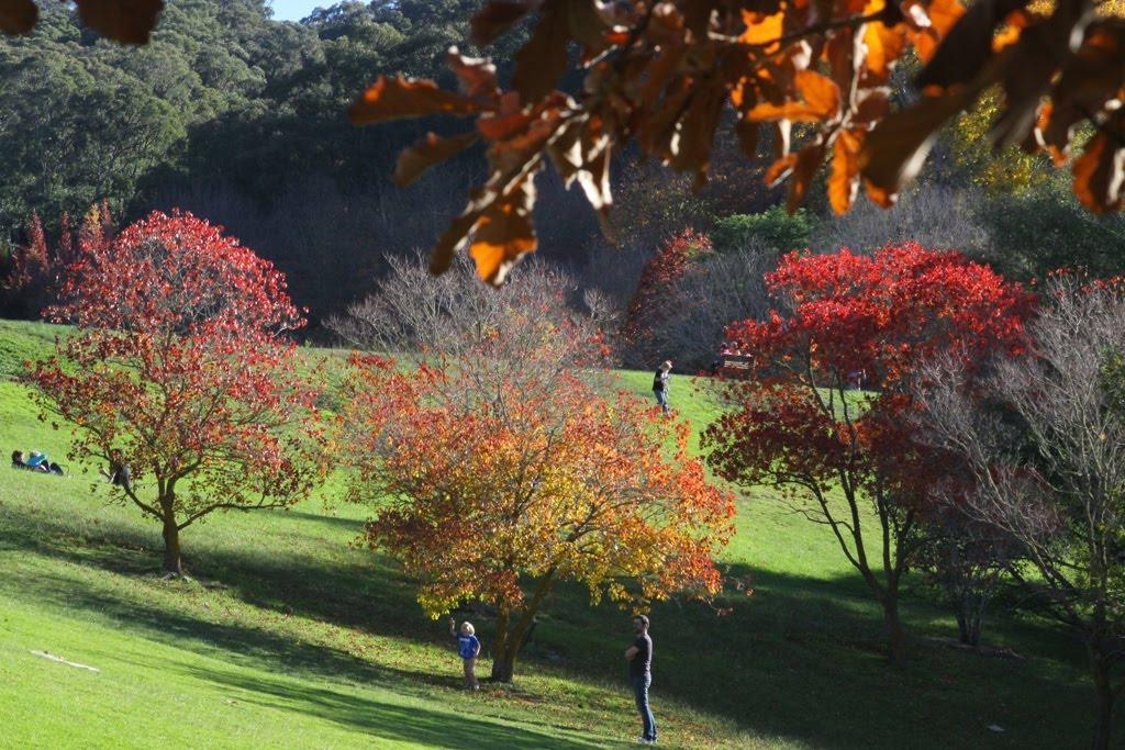 Tony 39 S Photo Blog Mount Lofty Botanic Gardens