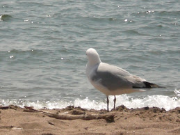 カモメとビーチ