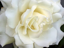 Mis flores preferidas