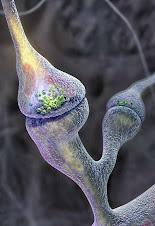 Foto por microscopía electronica de una sinapsis