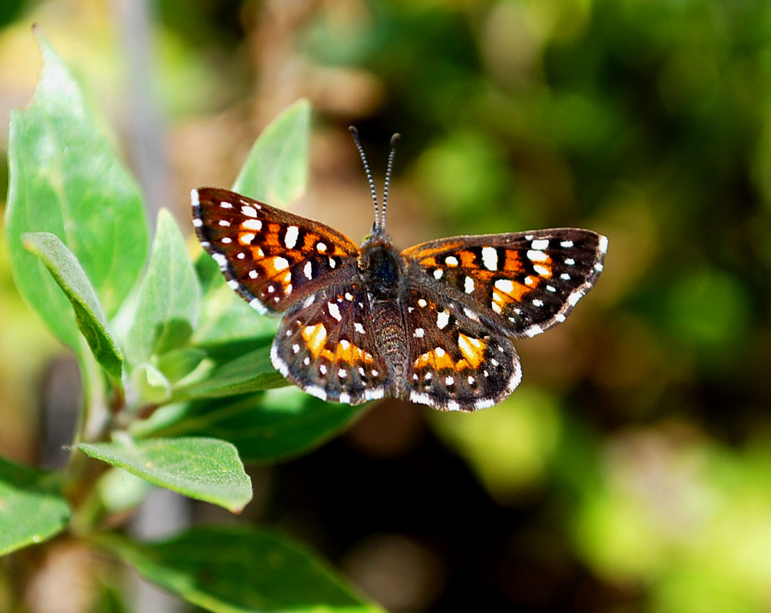 eternal youth of nature teamwork butterflies and plants