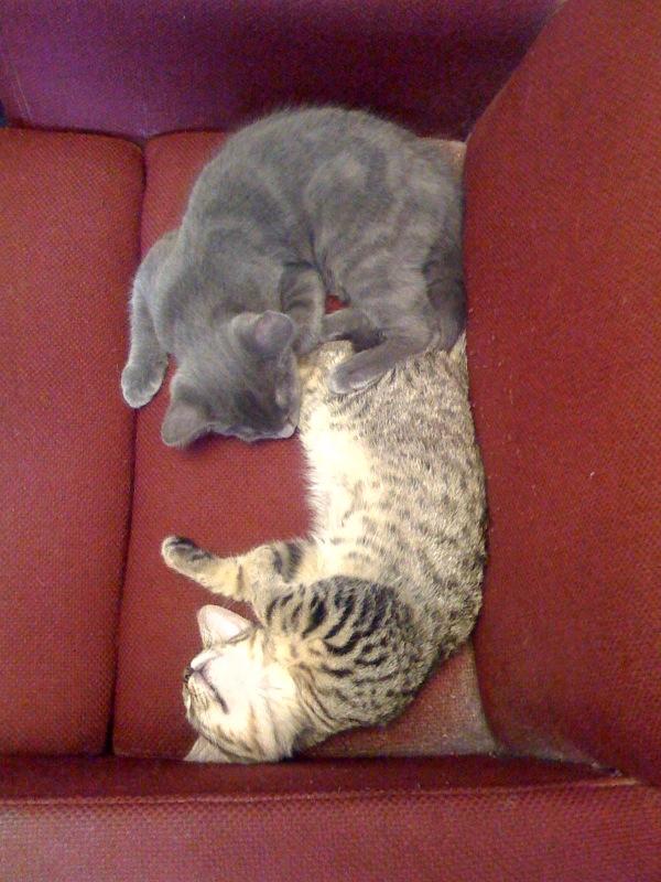 [kittens]