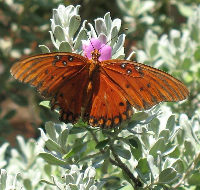 Butterfly 2009