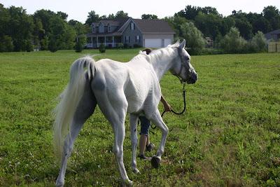 Royal Horse Company Blog