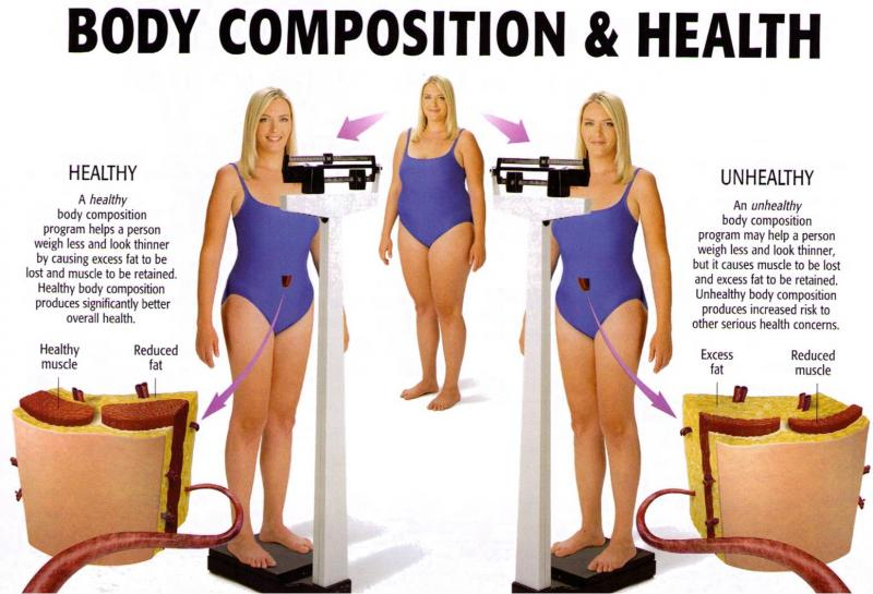 Body Composition Exercises | galleryhip.com - The Hippest ...