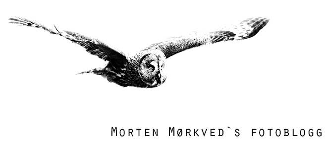 Morten Mørkved`s fotoblogg