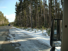 Snow Along Road in Yellowstone