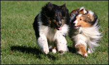 Mount Olive Dog Park