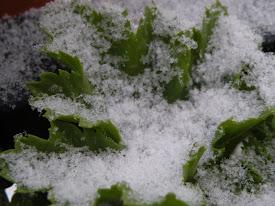 Gran nevada en Jaén