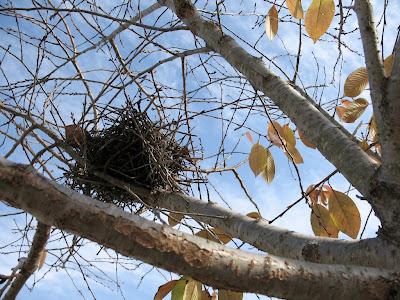 'burb nest