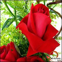 desejo a todos os meus amigos de blog, um 2010 cheio de amor e muita esperança de um mundo melhor.