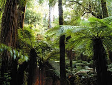 el ambiente vegetal