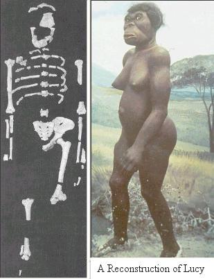 vem är lucy australopithecus