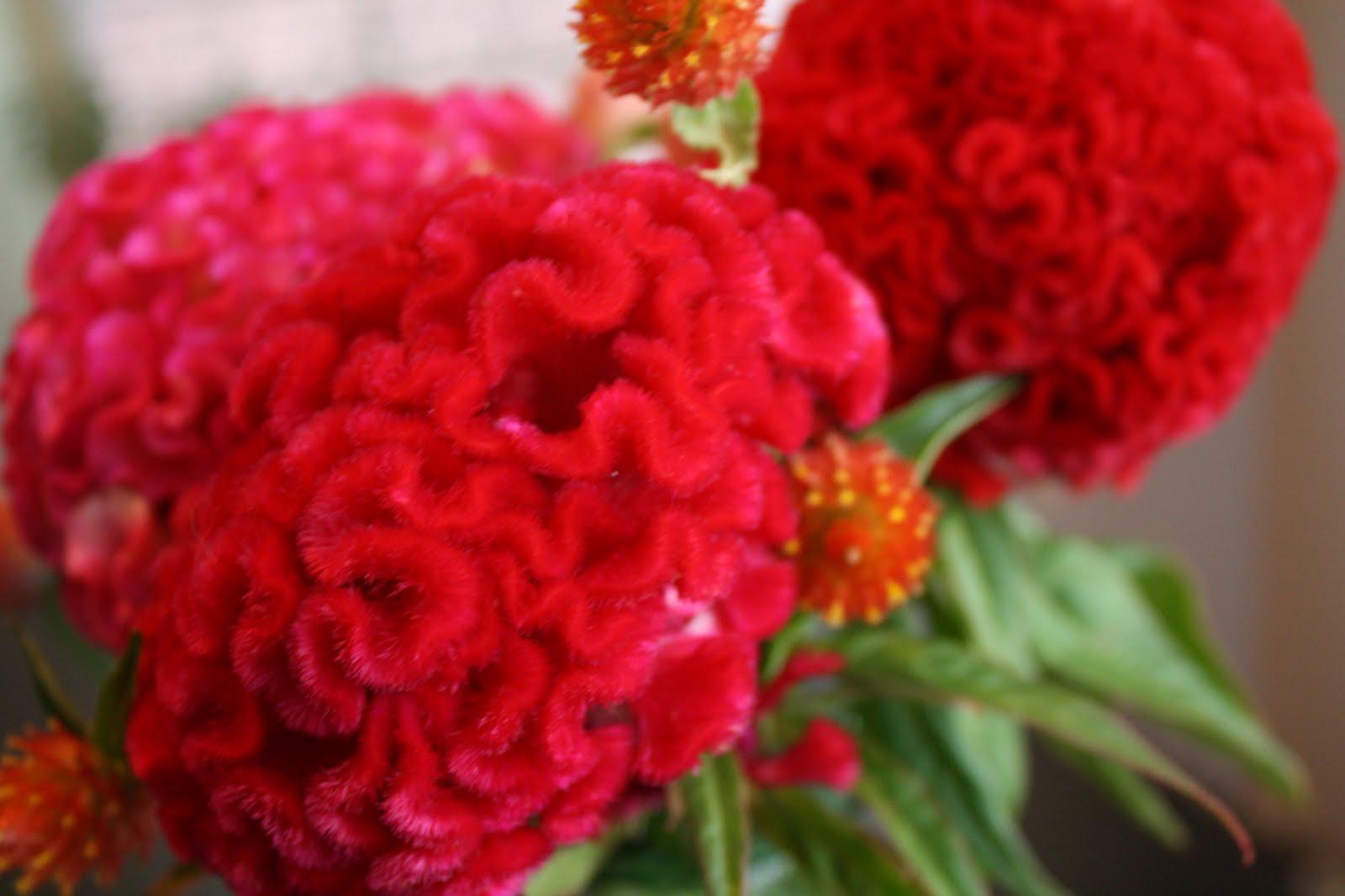 Clairest My Birthday Flower