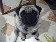 My Pug!