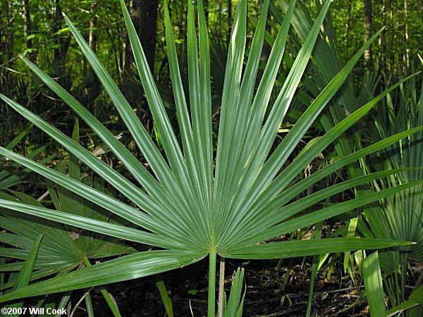 la palma catholic singles Cono sur 'la palma' single vineyard block 25 syrah, san antonio valley, chile.