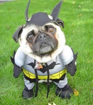 Funny Dog Batman Animal