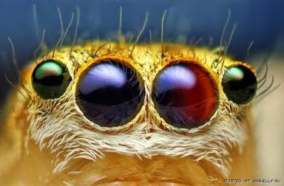 [Image: mata+serangga+%2814%29.jpg]
