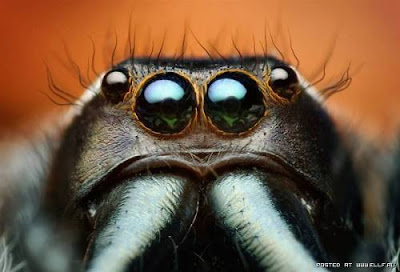 [Image: mata+serangga+%285%29.jpg]