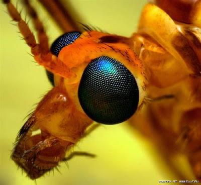 [Image: mata+serangga+%284%29.jpg]