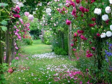 quero um jardin assim