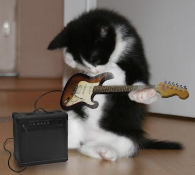 gatinho guitarrista