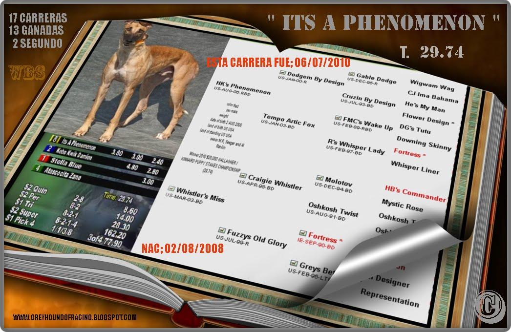'' ITS A PHENOMENON, GRAN  FUTURO, A LOS DOS AÑOS, GANO 13 DE 17 CARRERAS.