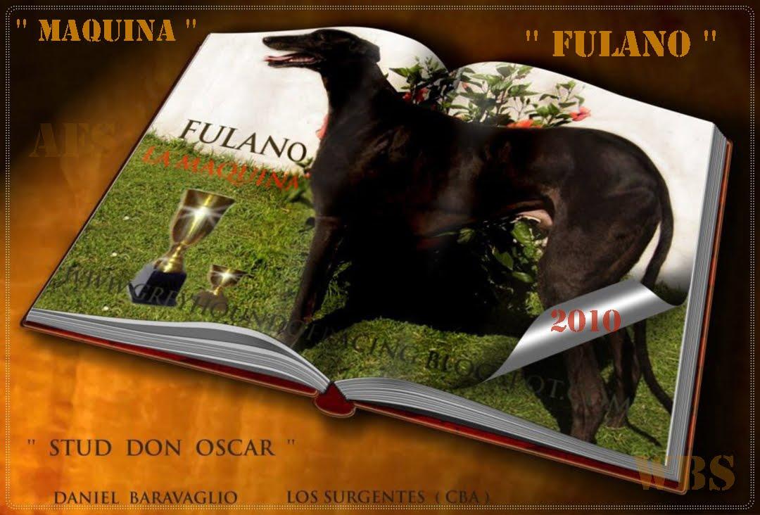 '' FULANO  EX REPRODUCTOR  DEL STUD  DON  OSCAR  ''   (  CBA )