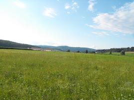 Muljavski travniki