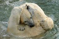 Un abrazo de oso más para la colección…..