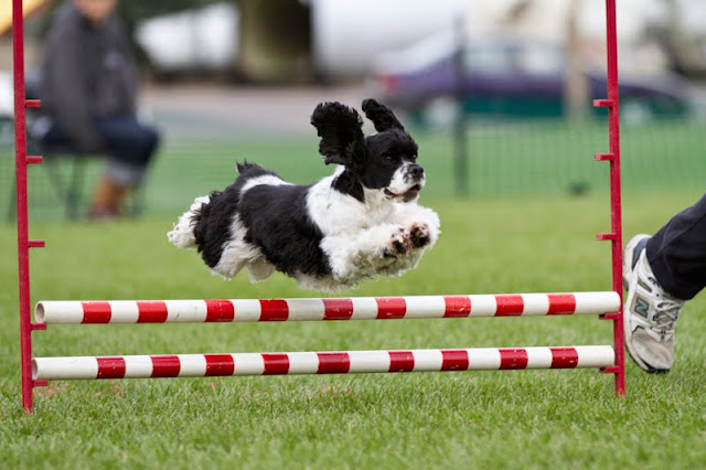 Claire Agility Weekend