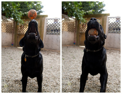 Jaxon+ball >Concentration   ADOPTED
