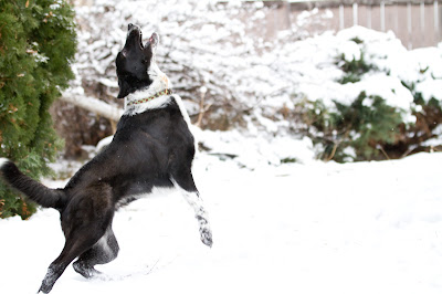 Lily+snow 10 >Fetching Machine