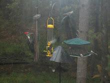 Birds at BSL