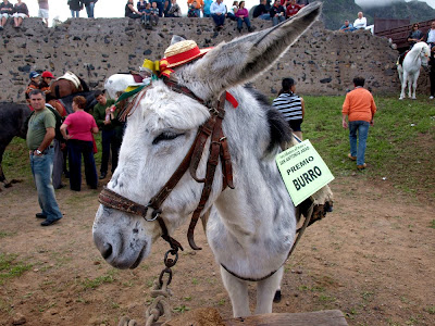Buenavista del Norte First+Prize+Donkey