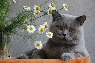 Фото ромашки и кот