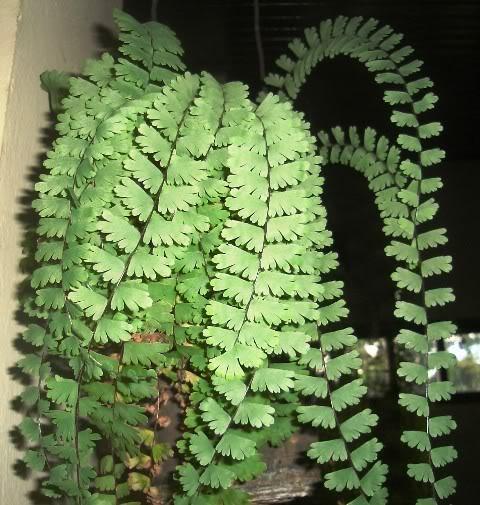Plantas da Amazônia Setembro 2010