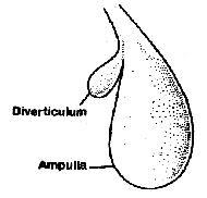 spermatheca earthworm reproductive female pheretima posthuma