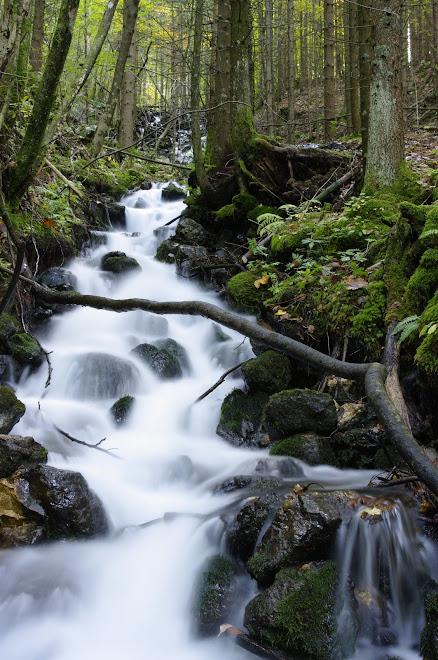 ko potoček postane potok