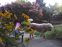 Mac Enjoys the Summer Garden - Sept 09