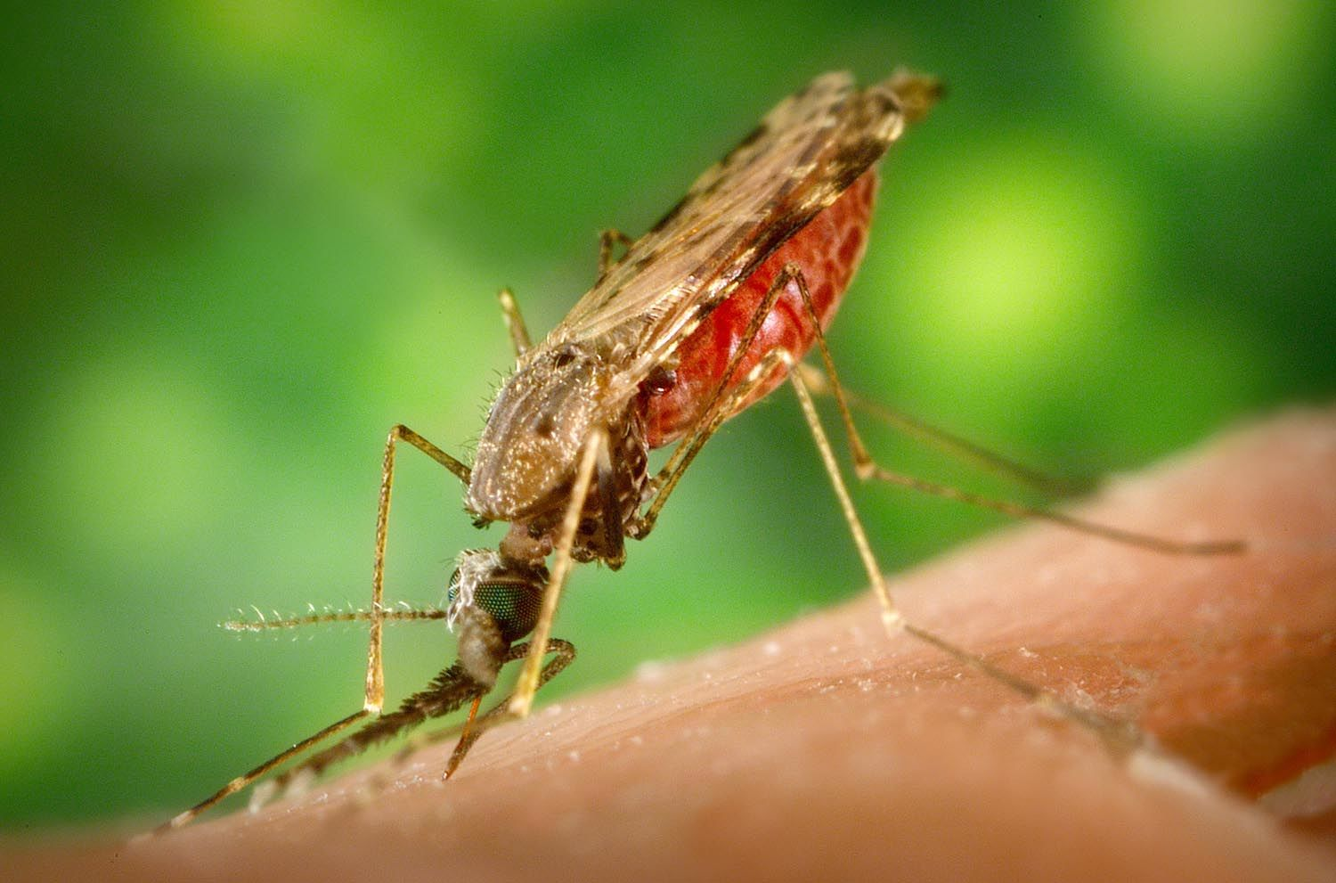World Daily Forex Updates Blog Information About Dengue Fever