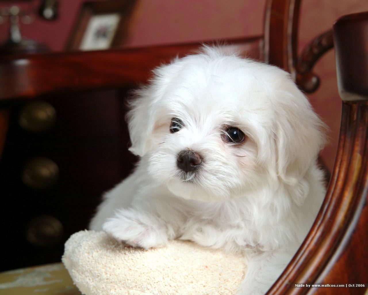 http://1.bp.blogspot.com/_FNQgkfCwYxs/TUaFwEb8ZvI/AAAAAAAAC98/UPG-6-u1gMk/s1600/white%2Bdog%2Bcute-5.jpg