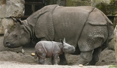 Rhinoceros animals and pets