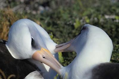 Pets: albatrosses.