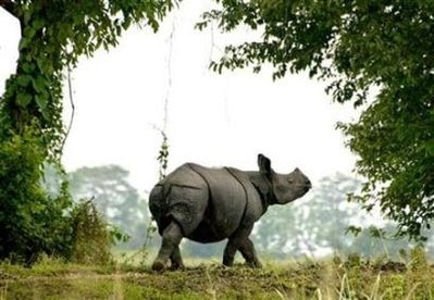 Animals: rhinoceros.