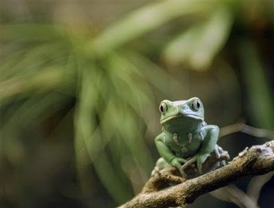 Animals: frog