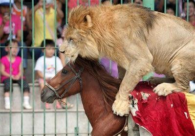 Animal: horse